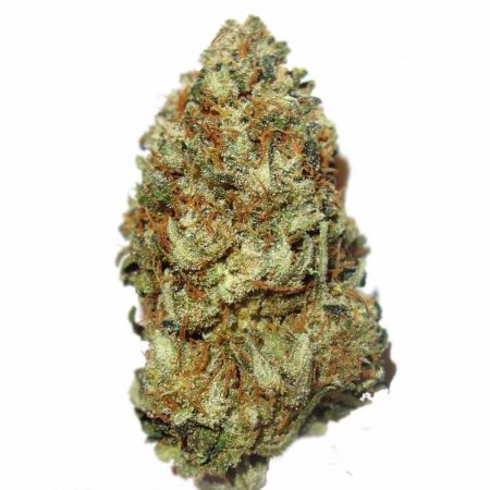 chocolope-marijuana-seeds-1_1024x1024