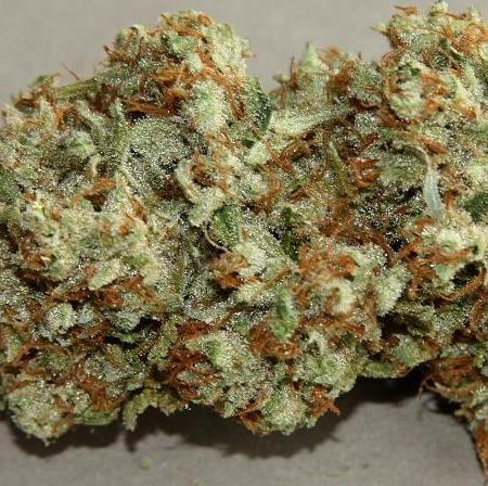 deathstar-weed-deathstar-fs-cannabis-nugs-orange-hairs-thcf-thcfinder-008x0s9